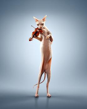 小提琴琴码的调整